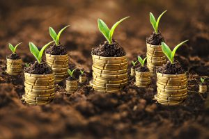 Gold Coins Sprouting Plants